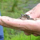 BioBlitz 2013: The Year of the Flood (Sort of)