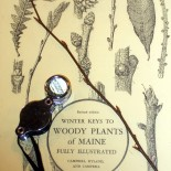 Wintertime Woody Plant I.D. with Rhode Island Natural History Survey