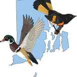RI Bird Atlas 2.0 Documents Birds across Rhode Island