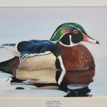 Going Quackers for Ducks:                                                  Junior Duck Stamp Awards