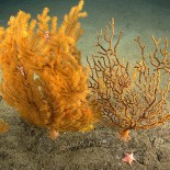 "New England's Marine Monument under Fire: ""Review"" threatens preservation status"