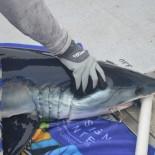 URI Tracks Mako Sharks