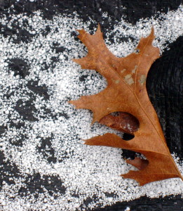 Graupel fell onto a black tarp.  The oak leaf provides scale.