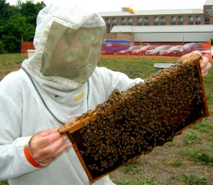 The author works on his fear of bees by holding roughly 7,000 at once.
