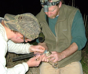 Masse and Prof. Scott McWilliams measure the capture.