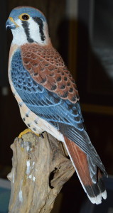 American Kestrel by Ray Tameo.