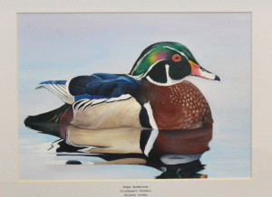 Wood duck painting by Hope Anderson.