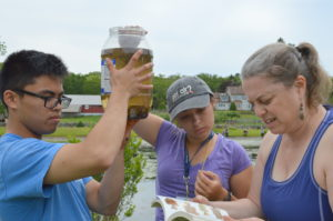 BioBlitz volunteers attempt to identify a variety of freshwater creatures.