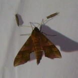 The Mid-Summer Moth Mingle